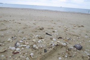 Okinawa Sea Shells